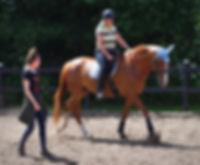 dressur, centreret ridning, akadmisk dressur, undervisning, hestetræning, ellen sauer