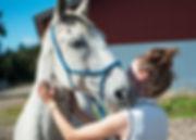 samvær, harmoni, jordtrænig, hms, horsemanship, rebgime, ellen sauer, hestetræning, picasso, andalusier
