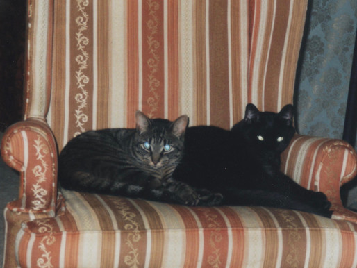 The Story of Two Transatlantic Cats