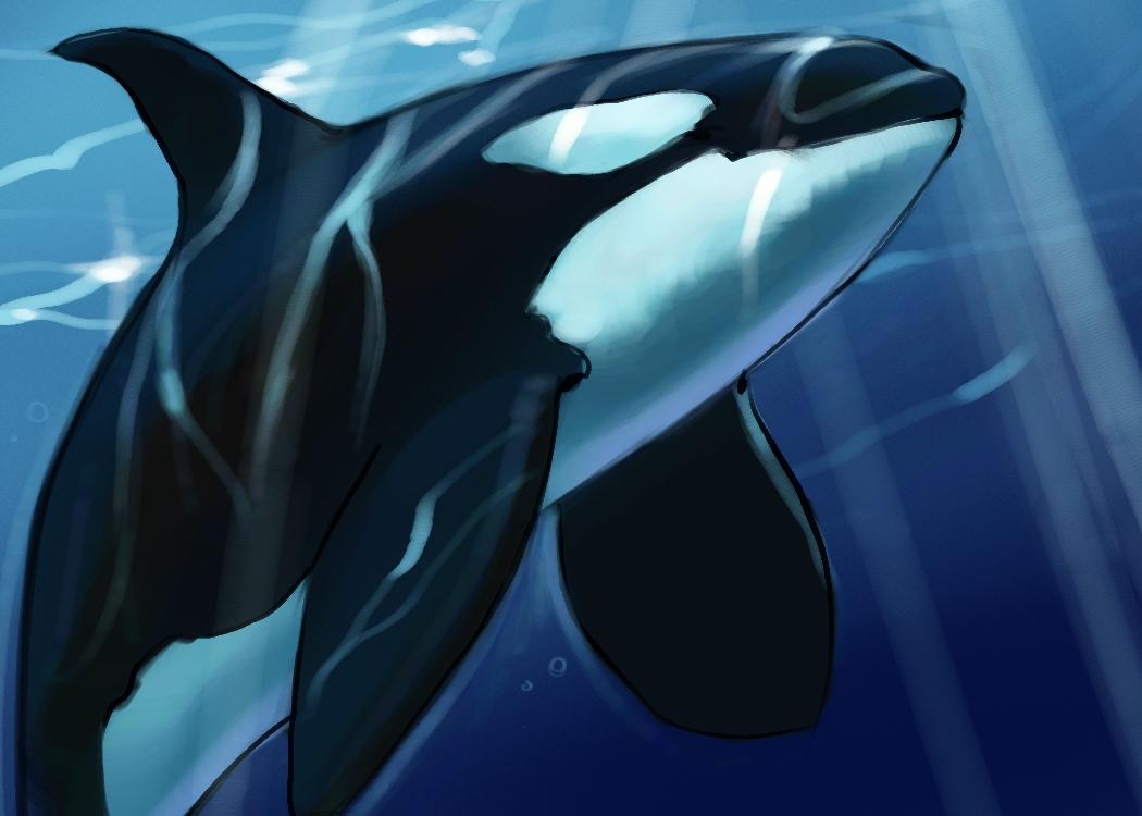 orca_002