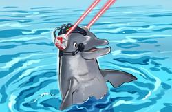 dolphin_001