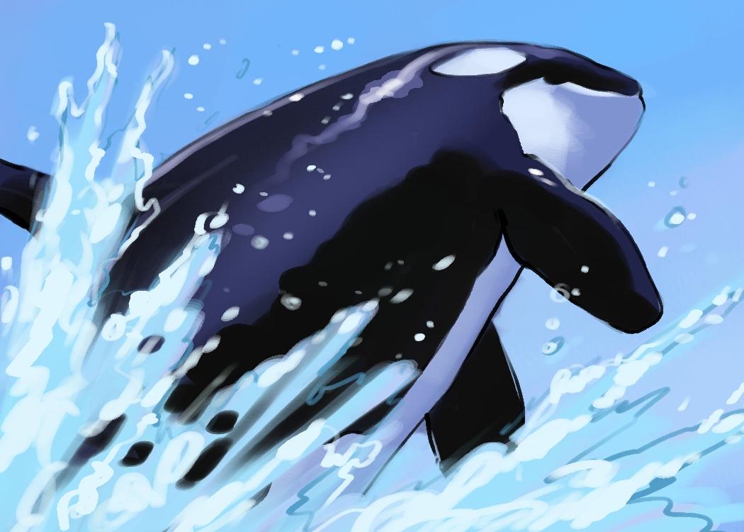 orca_004