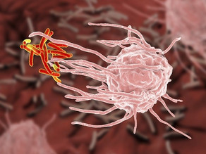 New research shows how immune responses to TB infection differ in newborns