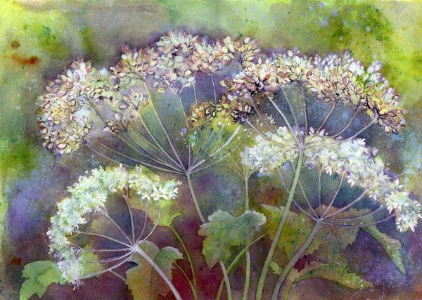 322201_cow-parsley-by-penny-hopkins