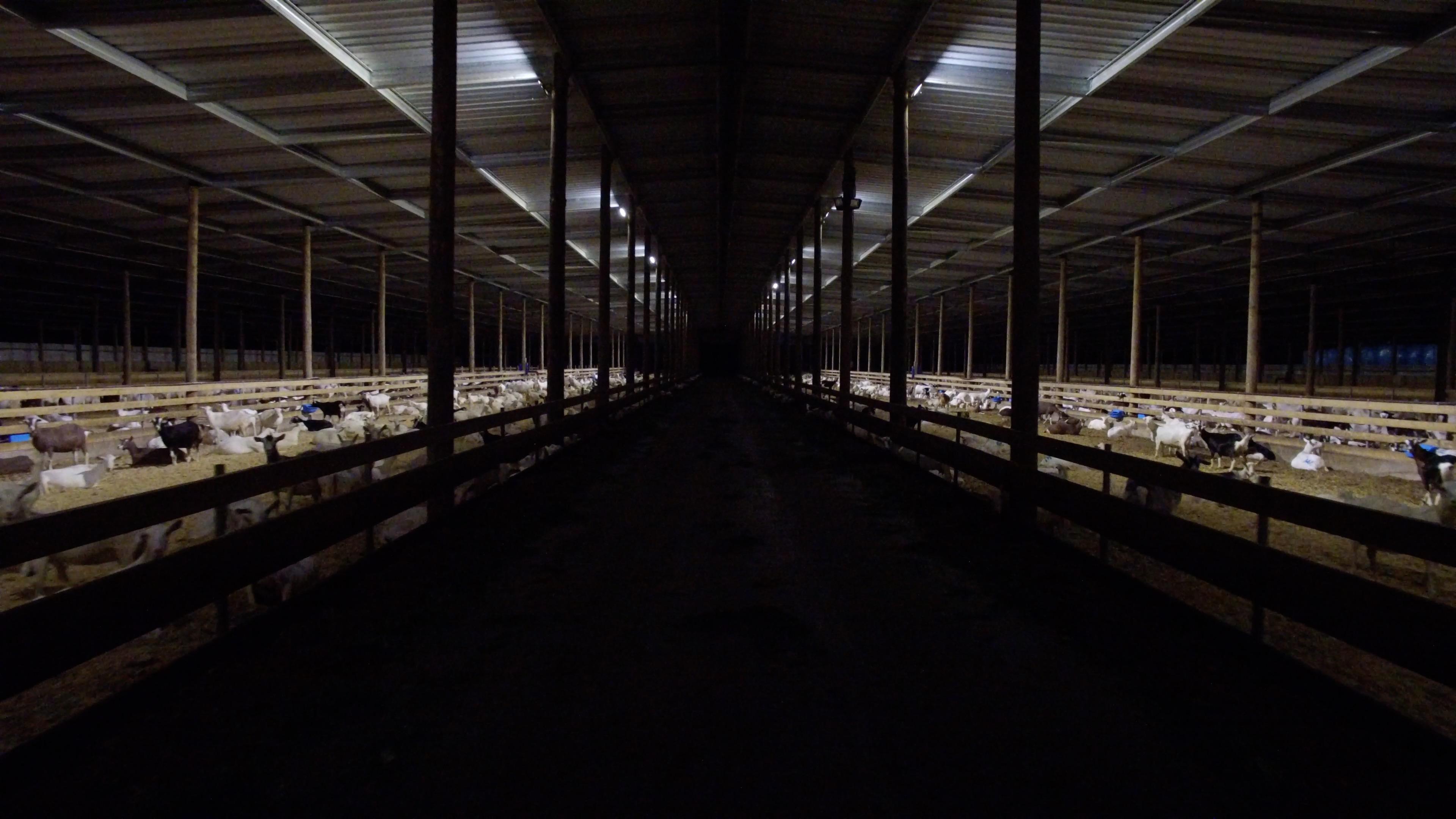 night time barn