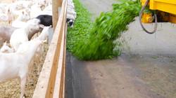 Grass Presented