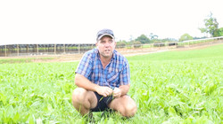 Shaun in Pasture