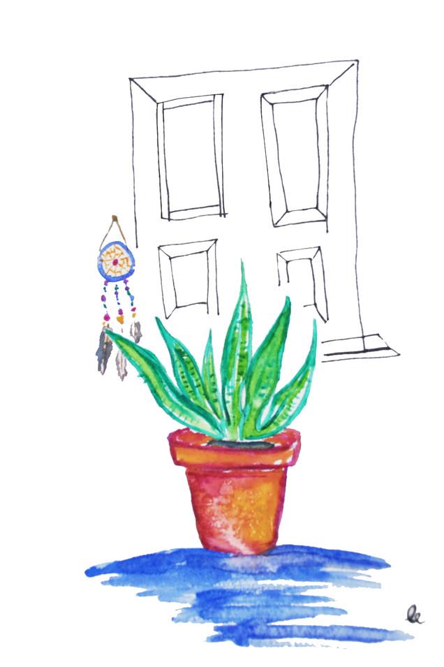 Aloe and Dream