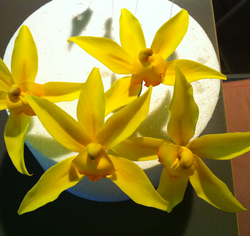 Orchid Cake Toppers