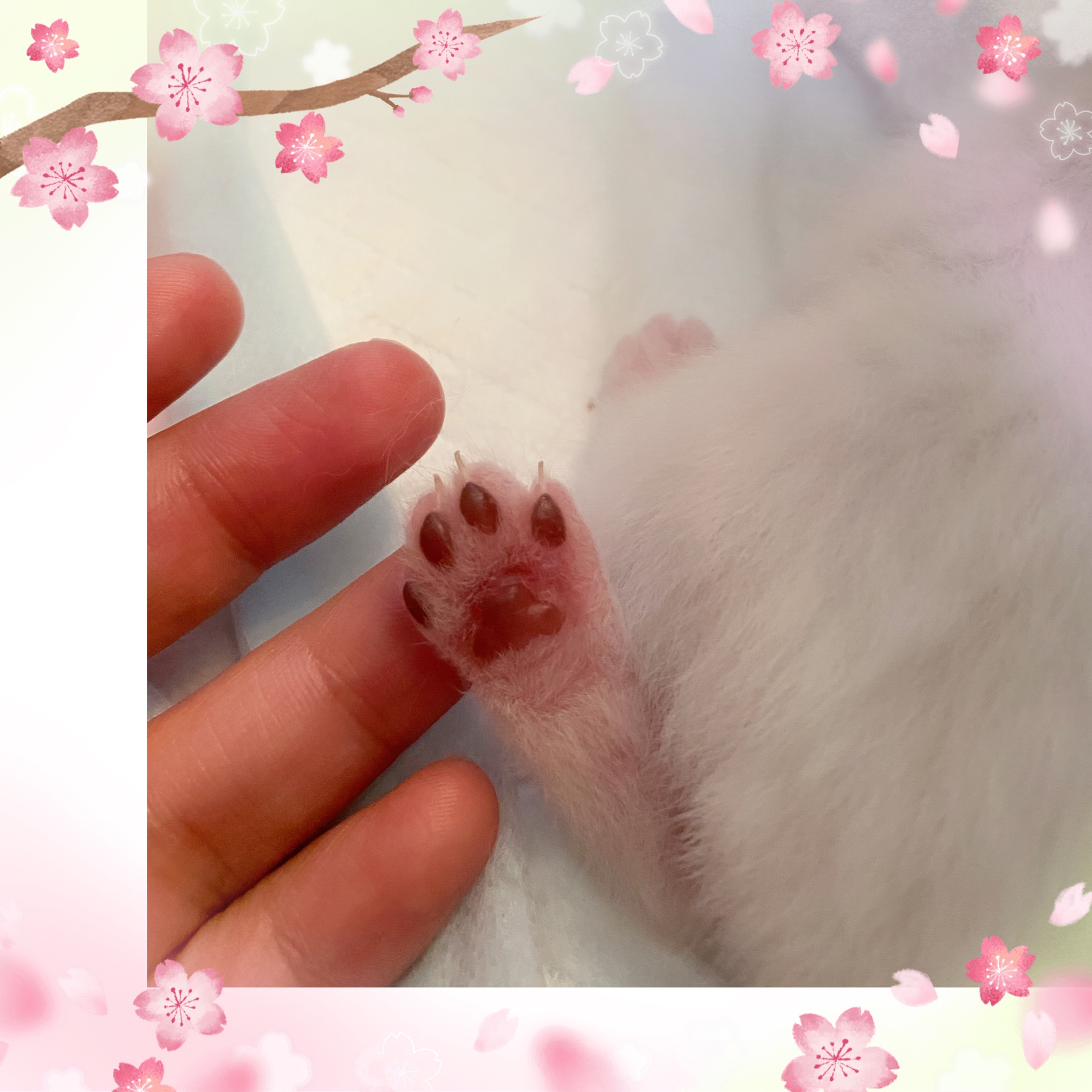 whose paw is this?