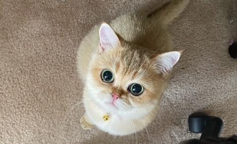 Please pet me!