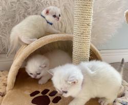 3 little piggies at play