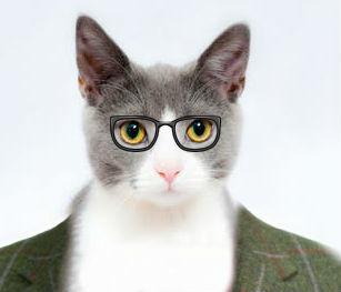 Dr. Cat Pajamas