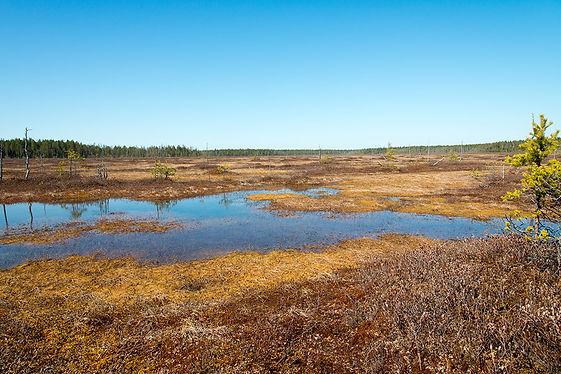 гусиное болото