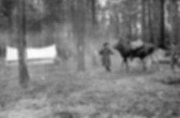 Перевоз вьюками грузов для лесоустроител