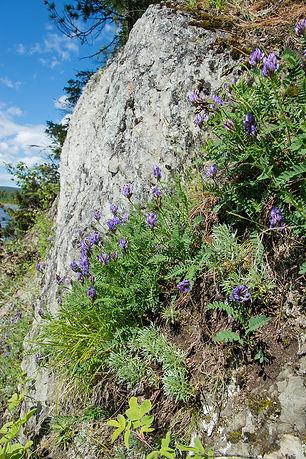 Цветущие скалы
