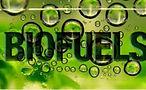 HEMP - Biofuel.JPG