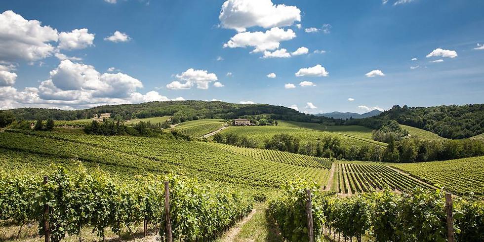 Il Gavi e le colline del Monferrato