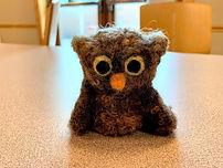 201907 Owl 14.jpg