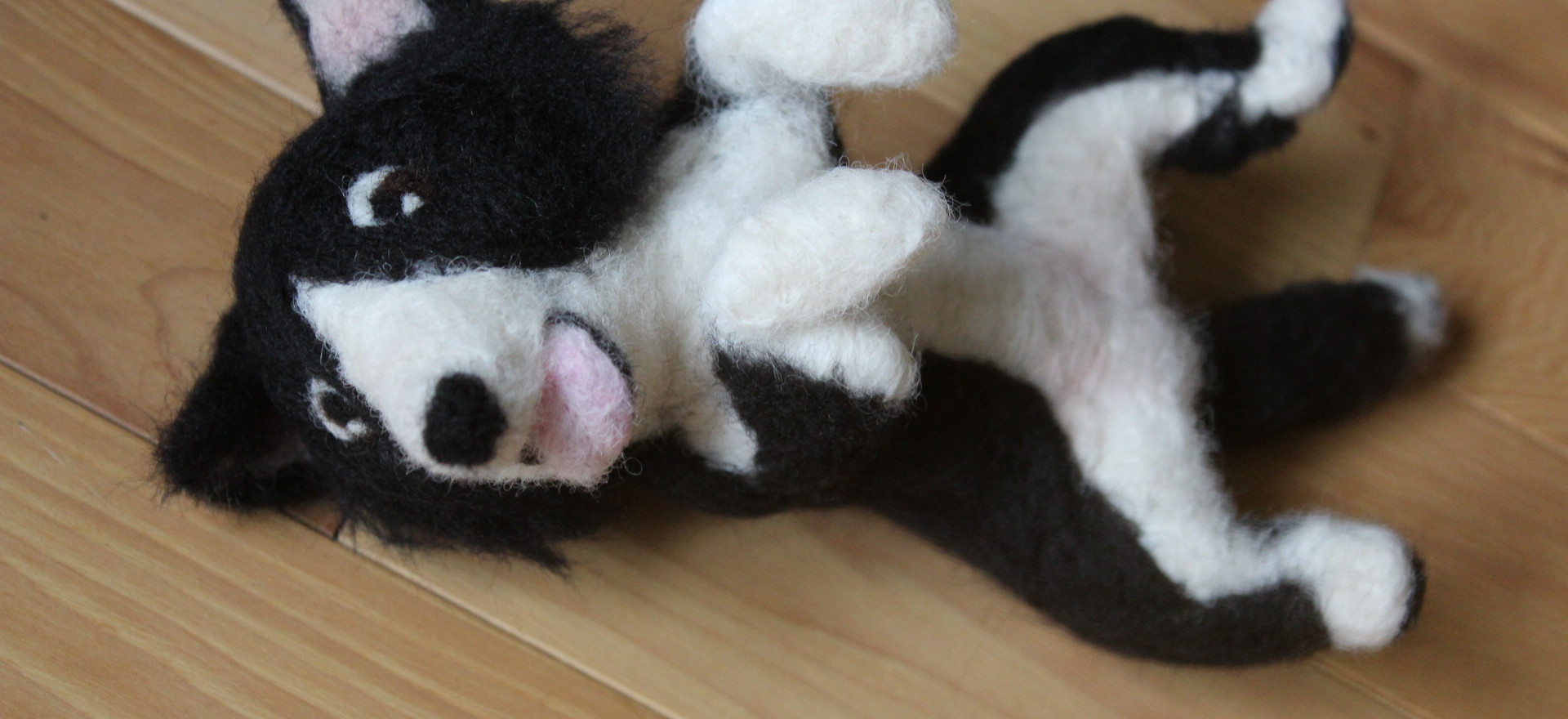Border Collie Rolling