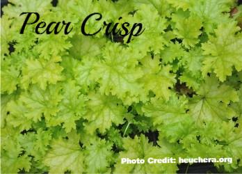 Pear Crisp_edited_edited.jpg