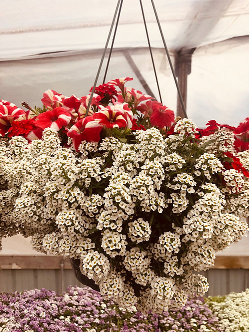 Red and White Mixed Hanging Basket