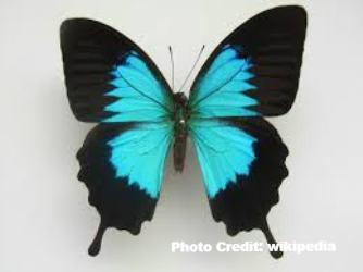 10 Fun Facts About Butterflies