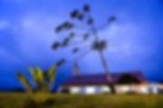The Night Tree.jpg