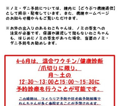 ねこちゃん春のノミダニ予防・健康診断キャンペーン!
