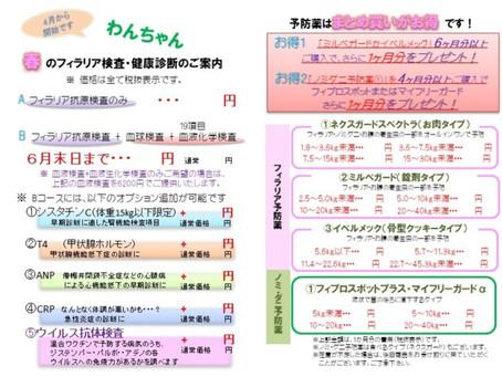 わんちゃん春のフィラリア予防・健康診断のキャンペーン!