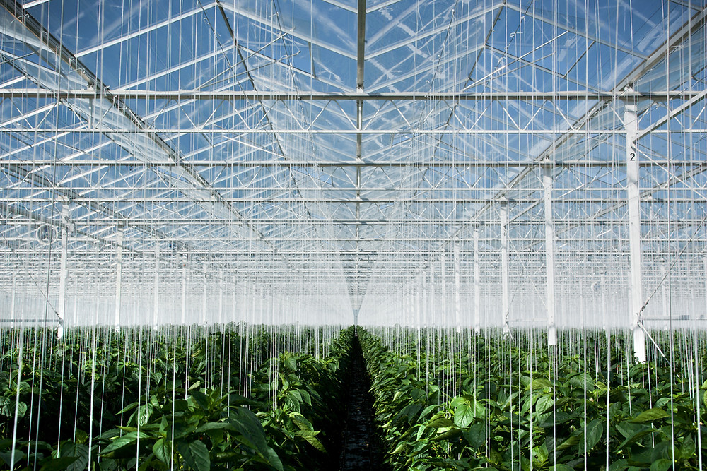 Green House - Creative Startup Fundraising