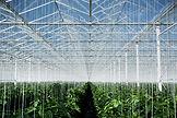 EWS Commercial Reverse Osmosis
