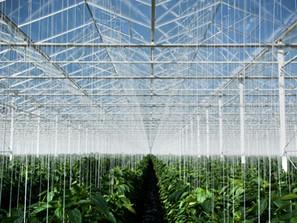 Agriculture conventionnelle vs agriculture biologique : que doit-on garder de ces modèles ?