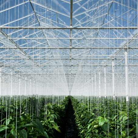 DIY Greenhouse Effect Model!