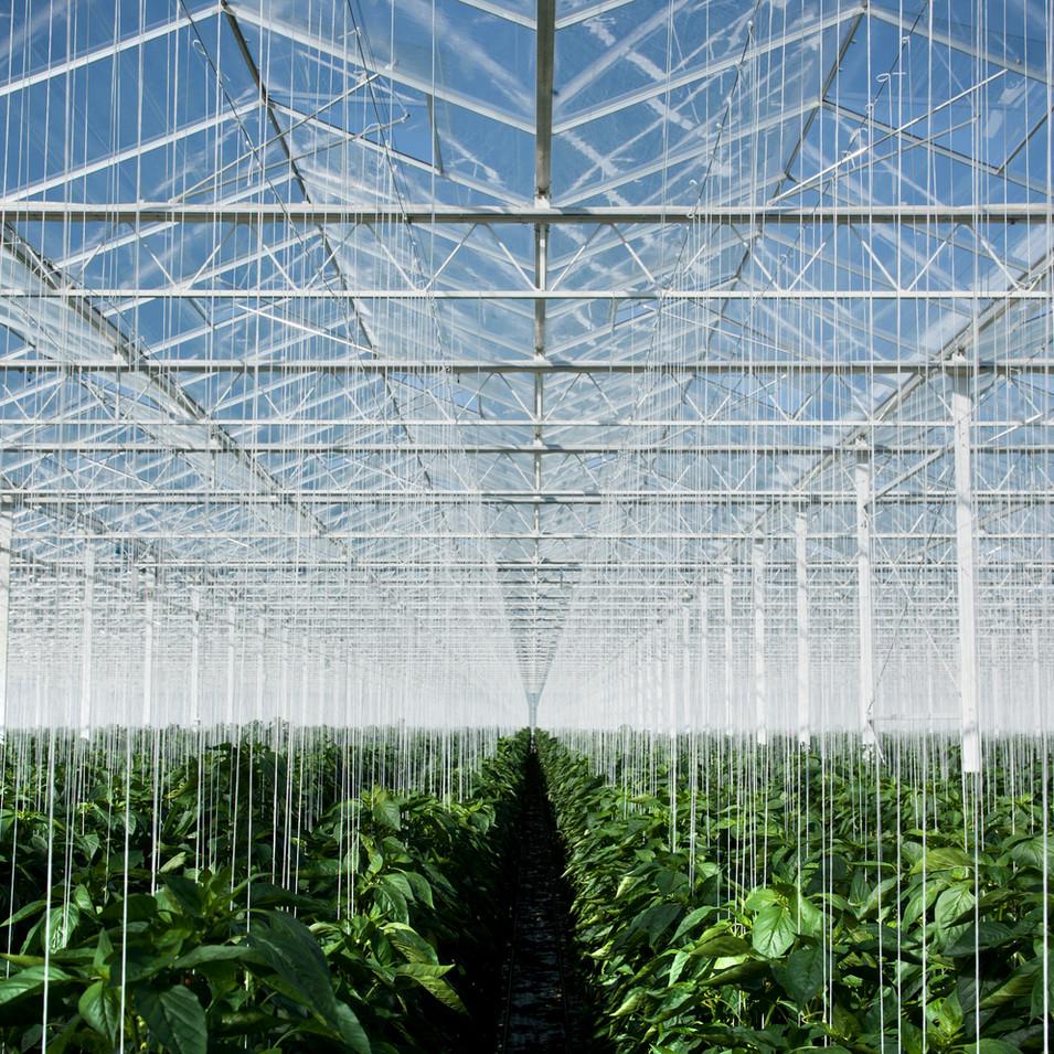 Katatheon Farms