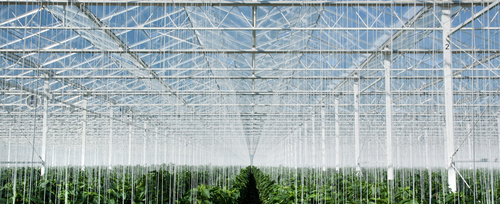 Geothermal Greenhouse Due Diligence & Investment Promotion