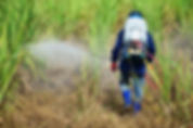 spraying herbicide.jpg