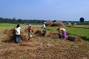 rice-paddy-workers.jpg