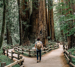 Muir Woods trails_edited_edited.jpg