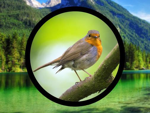 How to Start Bird Watching?