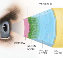 The three layers of tears in the eye