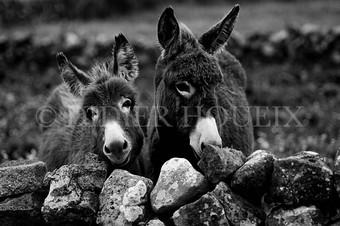 County Clare. Irlande