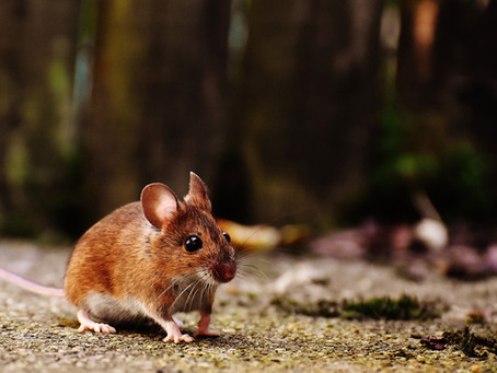 TIPS ON HOW TO KEEP MICE OUT OF YOUR HOME
