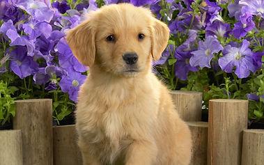 puppy-1920x1200.jpg