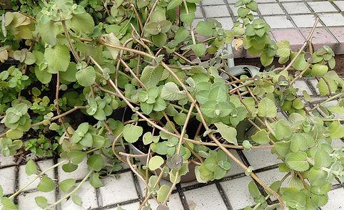 cuban_garden_1.jpg