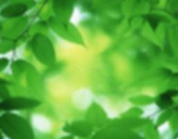 green-tips-gifts-lg.jpg