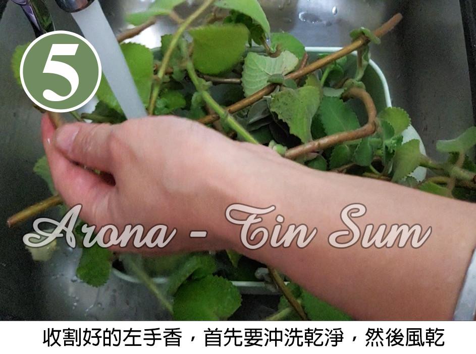 清洗乾淨左手香枝葉