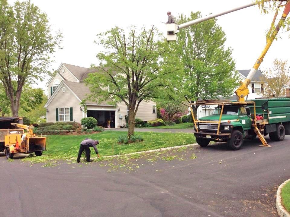 Aerial bucket pruning