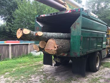 Removal of trees