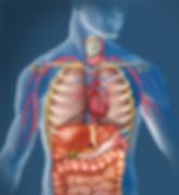 Organmassage
